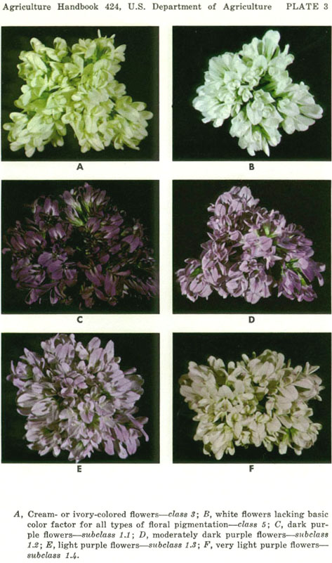 Agriculture handbook no 424 color intensity variations differences in hues of purple or violet are not considered the variegated class consists of nine heterogeneous subclasses mightylinksfo